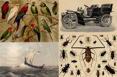 Prints of insects, animals, ships, weapons, botanical, cars, royal, eggs, cows, horses ets